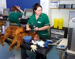Image courtesy The Veterinary Business Journal