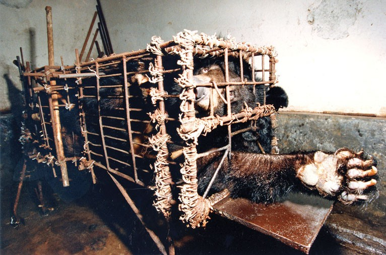 what is a bear bile farm ile ilgili görsel sonucu