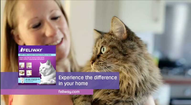 A screenshot from the Feliway Christmas TV advert.
