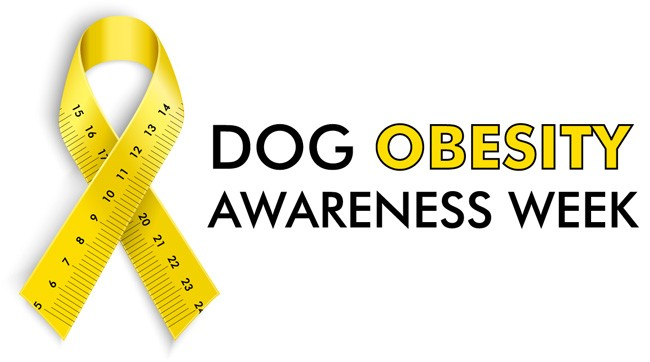 dog-obesity-awareness-week