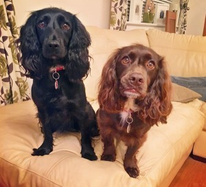 Pippa, left, died from Alabama rot.