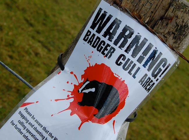 Badger cull area