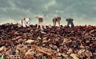 The RSPCA's Scrap the Puppy Trade campaign aims to highlight the extent of dog trafficking to the Government.