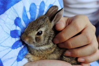 Rabbit in hand.
