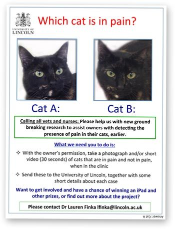 Cat pain flyer