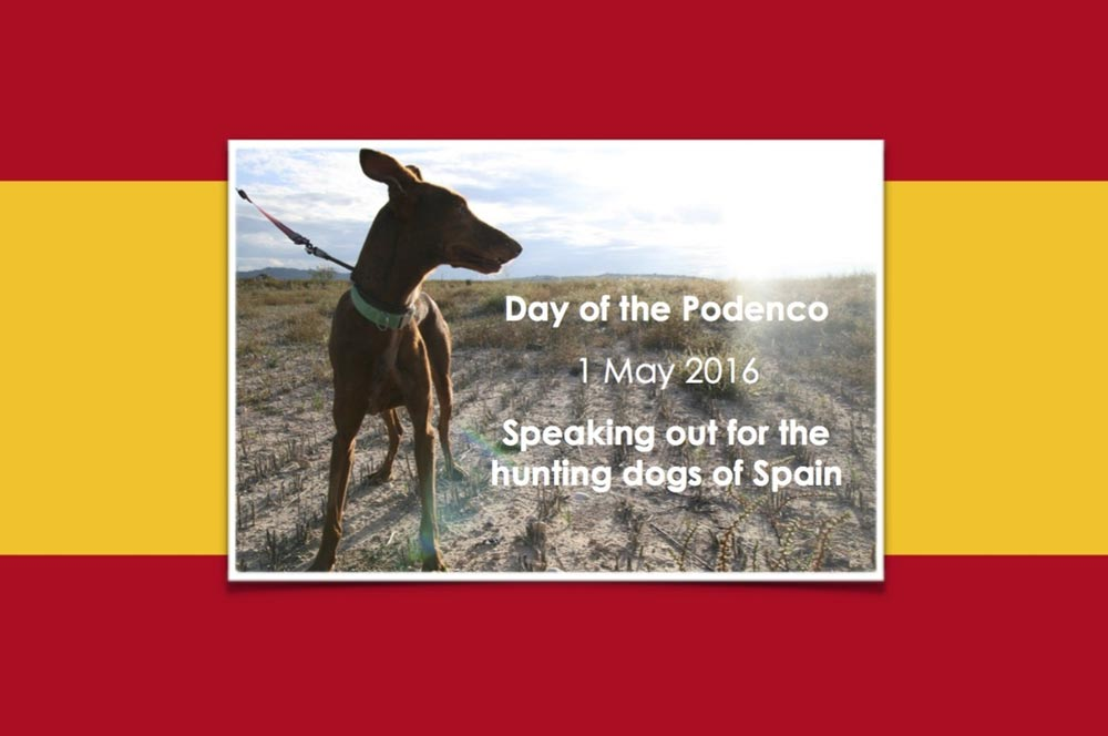 Day of the Podenco