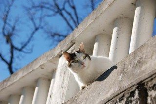 Cat on ledge.