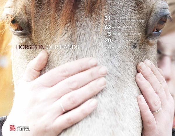 Horses in Our Hands