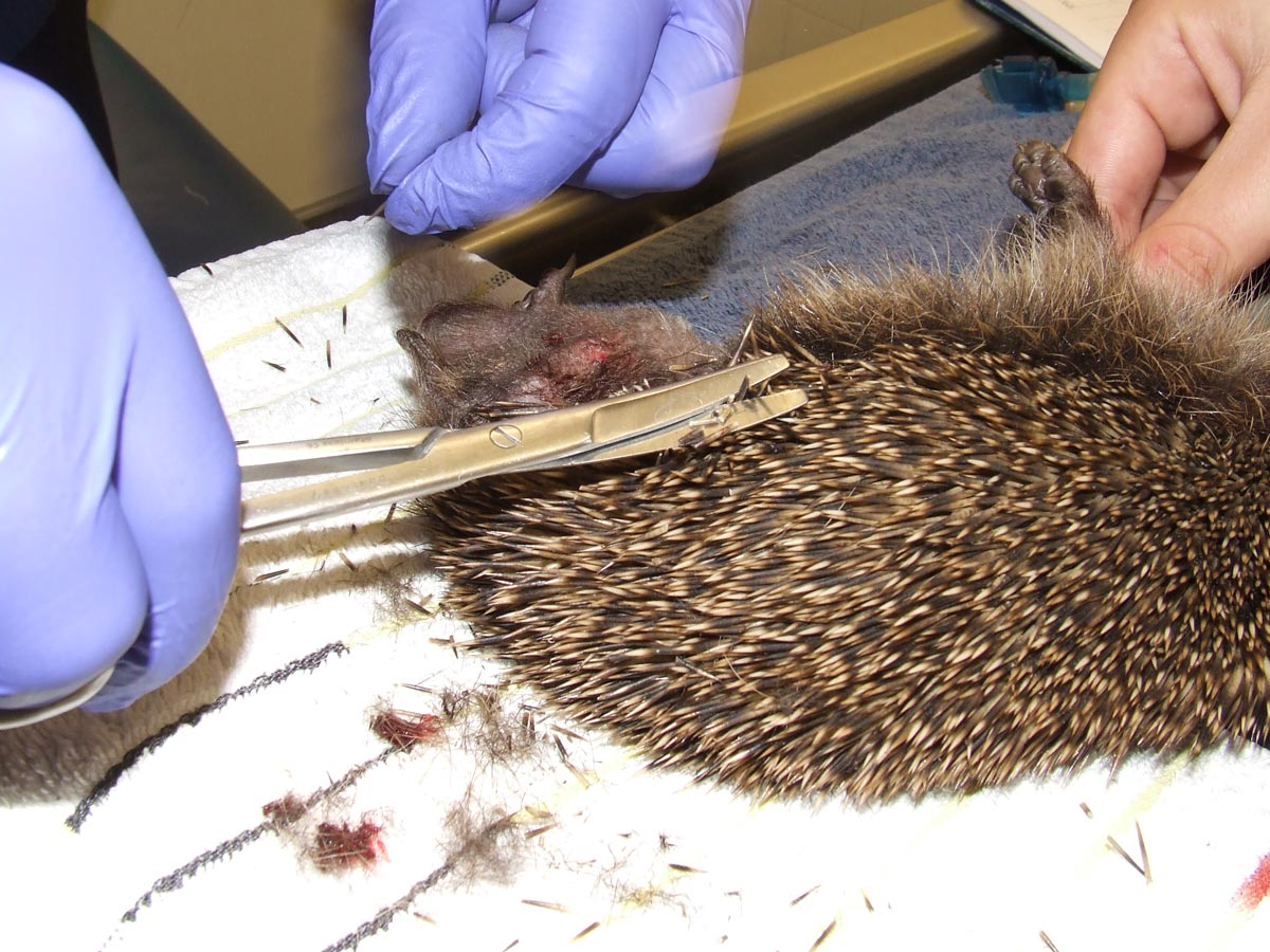 Spines being clipped.