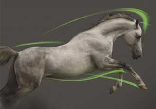 Dechra's locomotion range covers a number of conditions affecting movement in the horse.