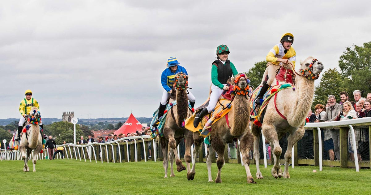 Douglas McRobbie (right) during the camel race.