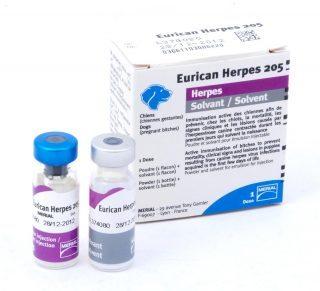 Eurican herpes.
