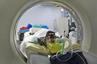Ziggy underwent a CT scan at the RVC Queen Mother Hospital for Animals.