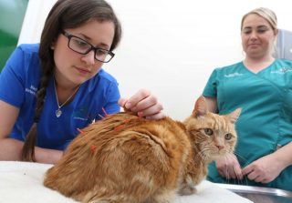 Nadine Headley has introduced an acupuncture service at Beechwood Veterinary Group in Leeds.