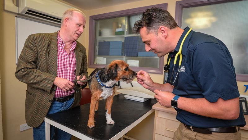 Alfie receives a check-up from Bruce Waddell, clinical director at Willows Veterinary Hospital (first opinion).