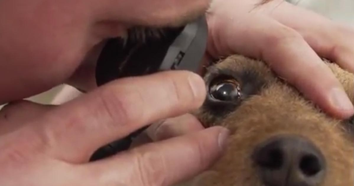 Chris Dixon uses an opthalmoscope