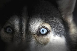 Recognising common eye conditions and being able to localise lesions was uncharted territory for Jordan before her time in the small animal hospital. Image: thenineworld / fotolia.