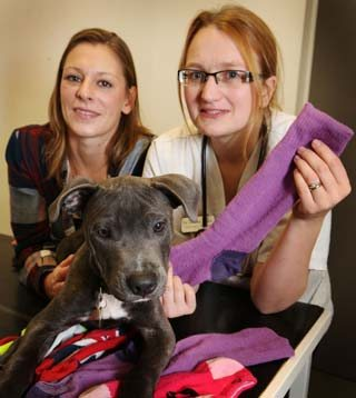 George with owner Kathryn Danby (left) and Prince Bishop Vets vet Gemma Taylor.