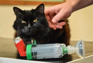 Cat with inhaler.