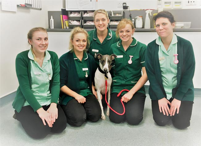 Jasper with Town and Country staff (from left): student VN Verity Malpass, RVN Katy Kirkham, RVN Harriet Goulden, head nurse and RVN Kathleen Gamble and student VN Grace Costall.