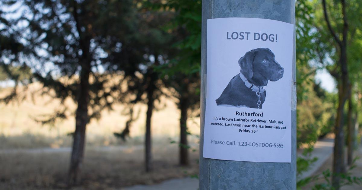 lost-dog_Fotolia_romanrdgz