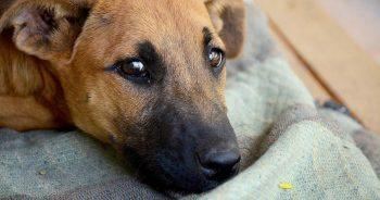 scared-sad-dog_pubdom-1440388