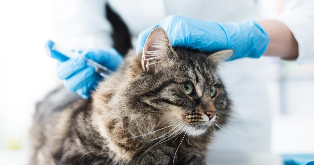 Vaccination cat.