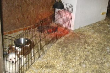 The RSPCA and police found 37 dogs and puppies in conditions with barely any light, and lying in faeces and urine.