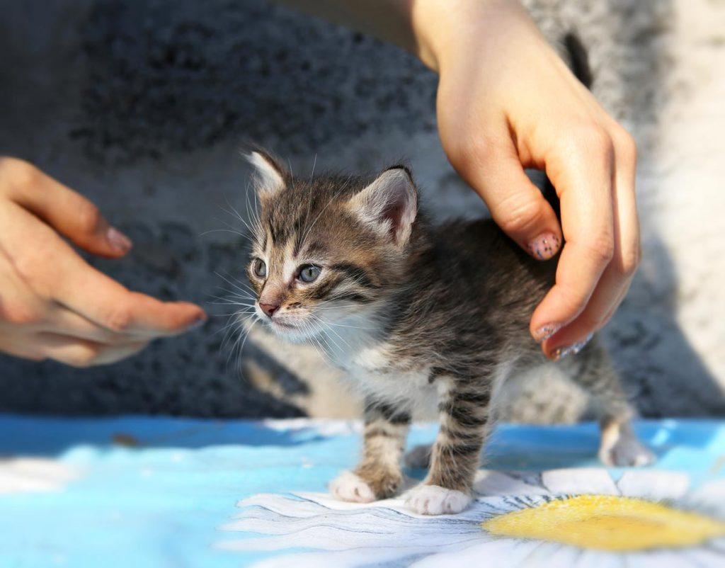 Kitten shelter