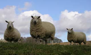 The VMD has agreed to change the authorisation of Zolvix 25mg/ml Oral Solution for Sheep from POM-V to POM-VPS.