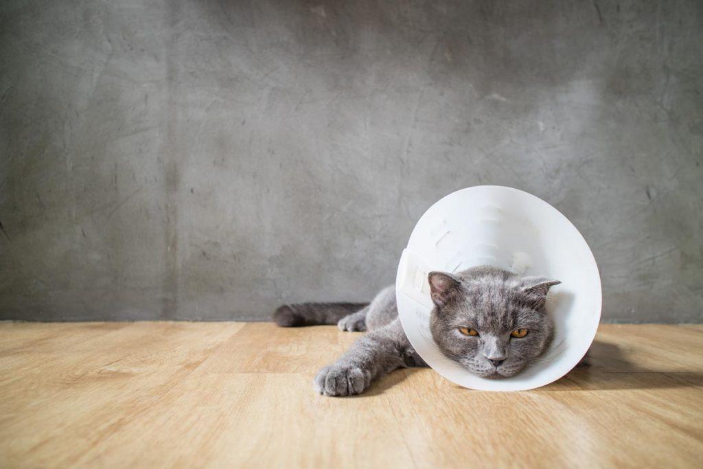 Cat collar pain