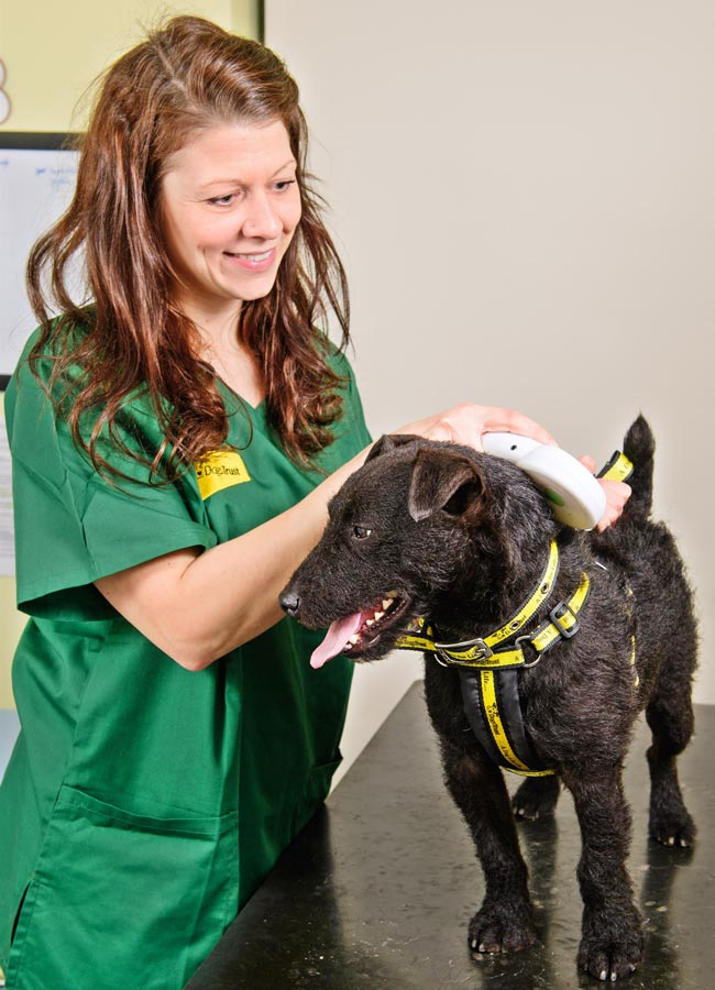Dogs Trust statistics show a fifth of the 43,000 strays reunited with their owners in 2015-6 were a direct result of a microchip.