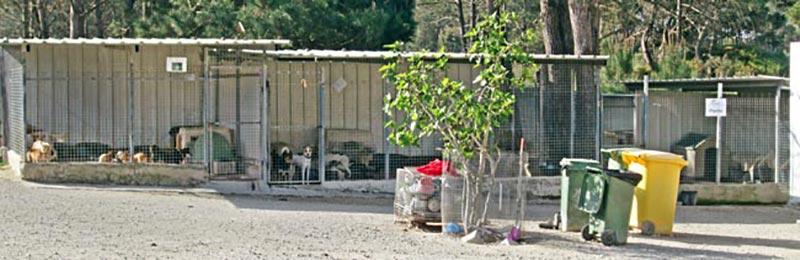 One of the rows of kennels. IMAGE: Bianca Associação.