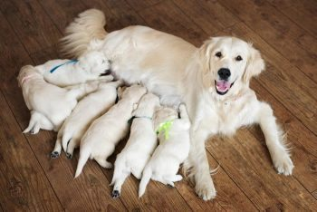 dog and puppies