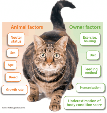 Cat and canine weight problems: administration and proprietor compliance strategies
