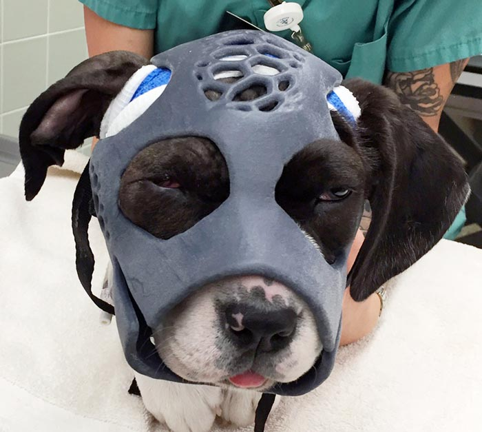 3D printed masks helps heal fractured canine cranium