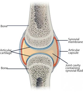 Widespread problems of equine joints: causes to remedy