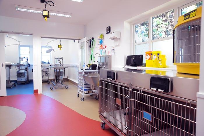 Hospital's gold star feline remedy recognised