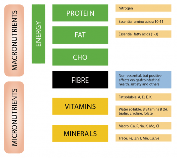 Companion animal diet: macronutrient necessities
