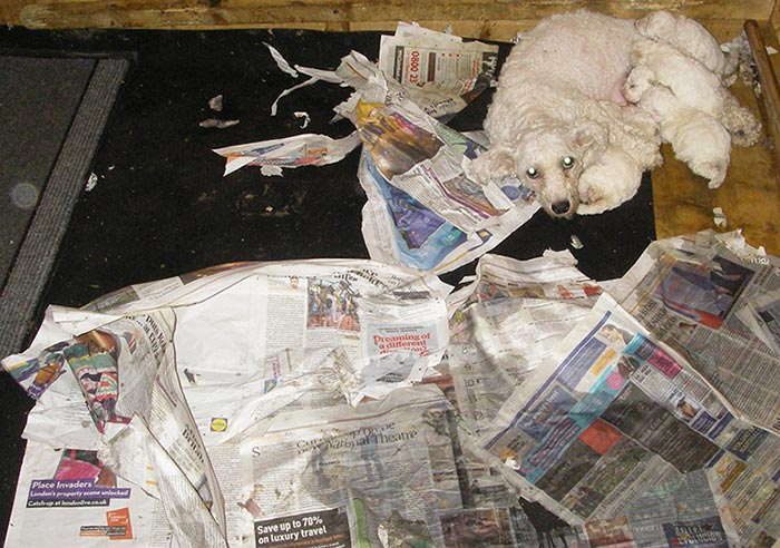 Ladies sentenced after 'disgusting' pet farm discovery