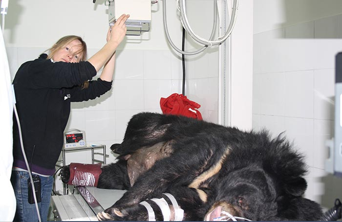 VN bears witness to abused animal care
