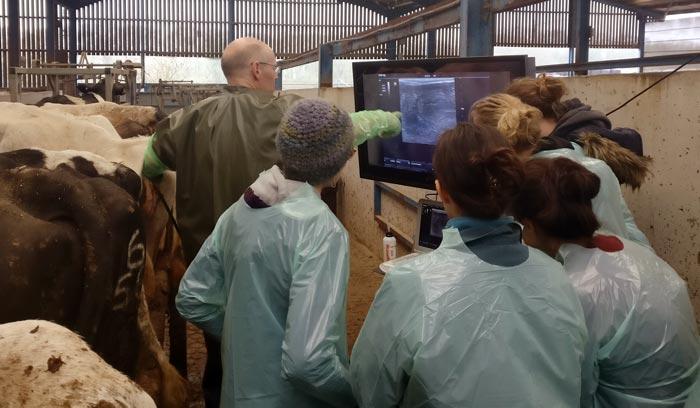 European cattle vets meet at Liverpool