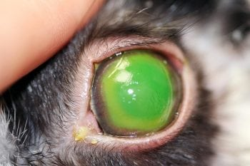 Chemical accidents in corneas
