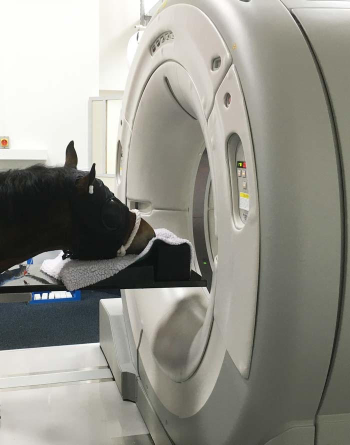 CT scanner with horse.