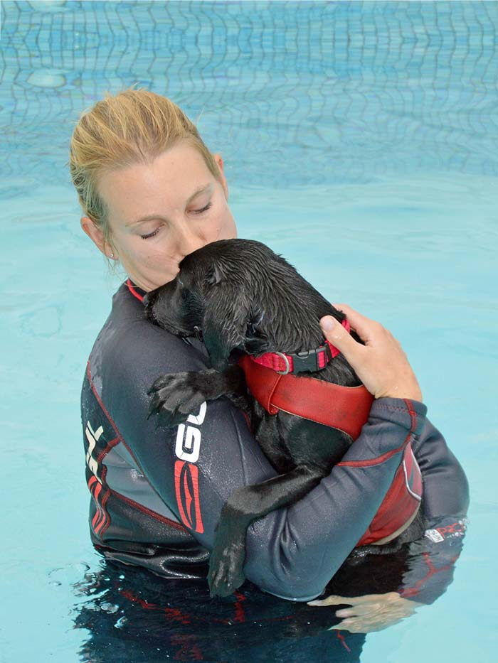 Labrador retriever Pickle learning to swim with physio Kate Watson.