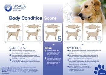 Weight problems in companion animals – recommendation and administration methods