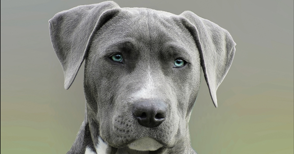 Prolific vomiting in UK dogs investigated | Vet Times