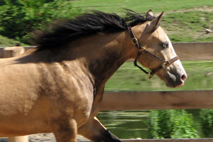 Other conditions affecting the nation's horses include skin diseases, respiratory disease and back problems.