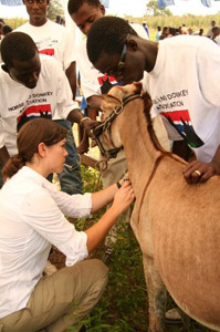 A volunteer vet working with the trust