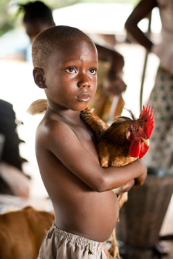 2.5billion of the world's population rely on chickens and other poultry for their daily needs.